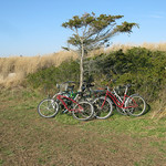 Bikes at Fire Island National Seasore