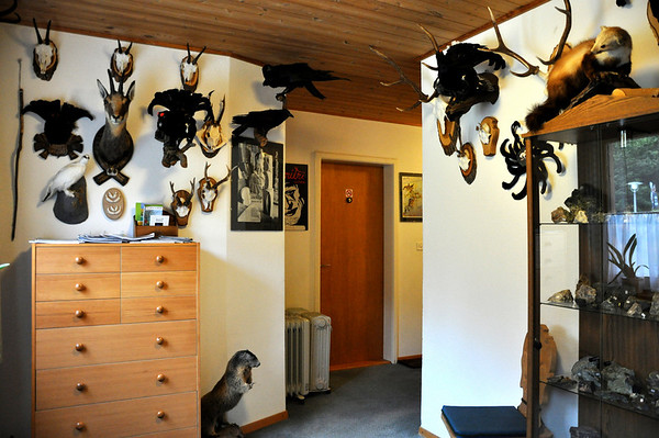 Ummm.. okay? Hotel Taxidermied animals
