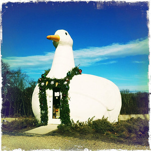 The Big Duck Dressed for Christmas