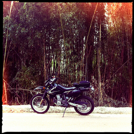 Bamboo forest and my DRZ