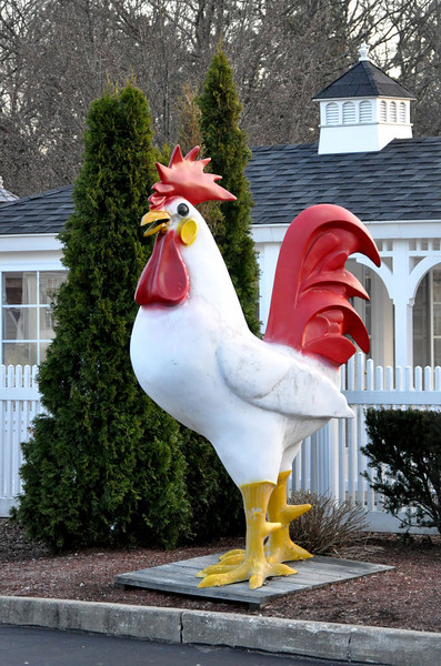 Fiberglass Rooster Long Island