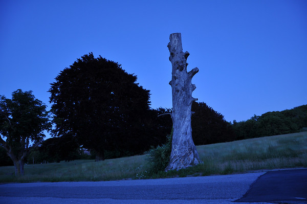 Old Tree at Kings Park Psychiatric