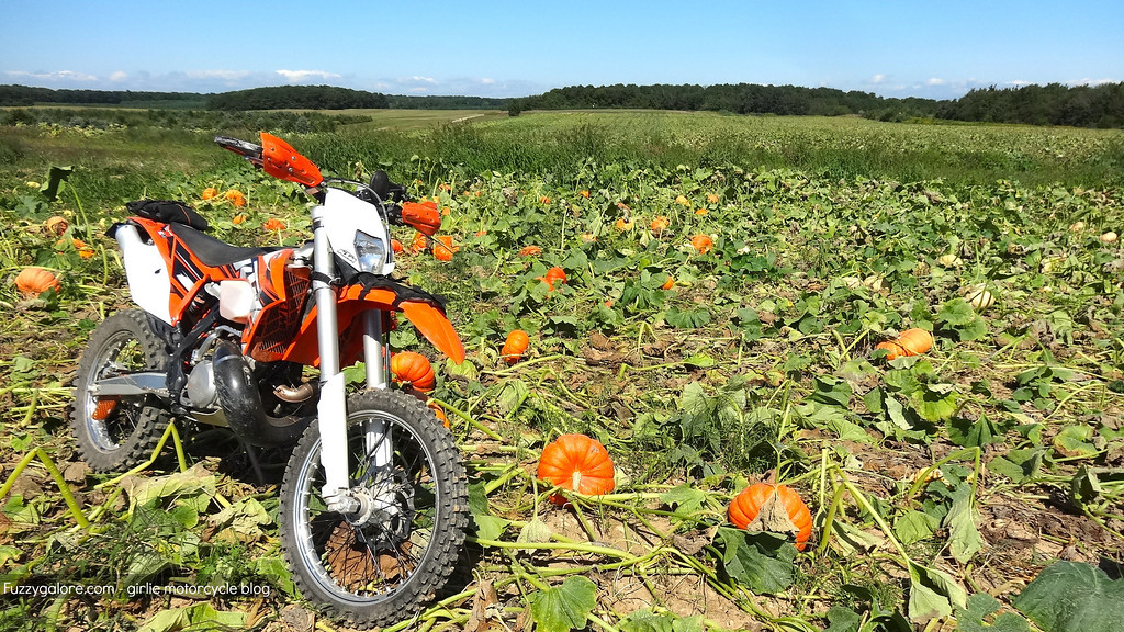 Kennys KTM 300 XC-W in the field of KTM seeds