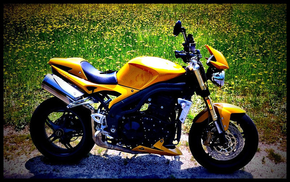 Triumph Speed Triple and Dandelions