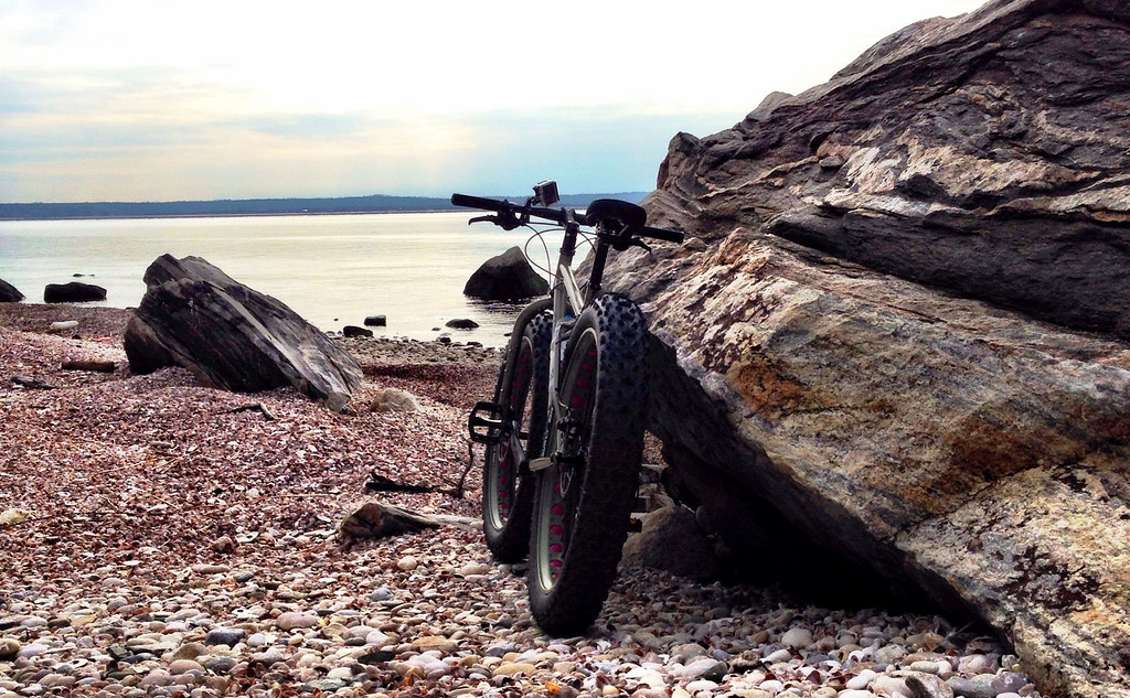 fatbike parked watching a seal in the sound