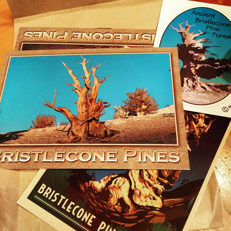 ancient bristlecone pine forest postcard