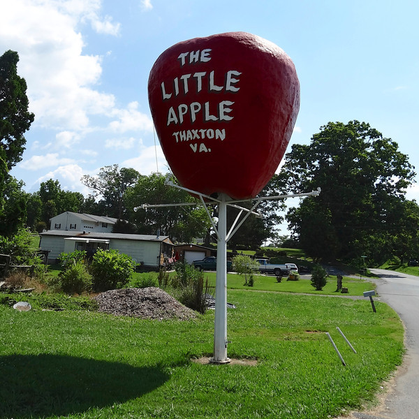 Thaxton Virginia Giant Apple