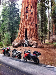 Kenny and Rachael at Sequoia National Park