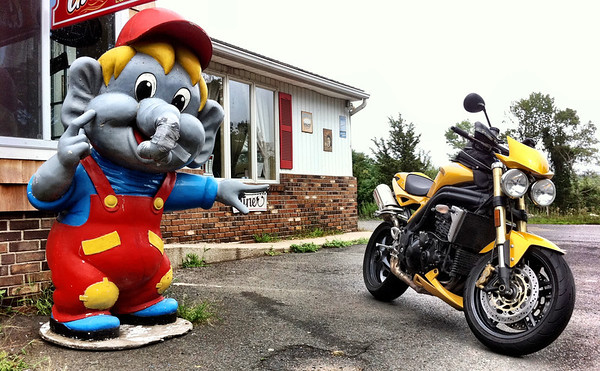 Roadside elephant and Triumph Speed Triple